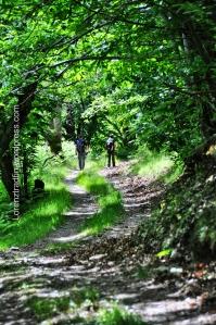chemin dans forêt cevennes