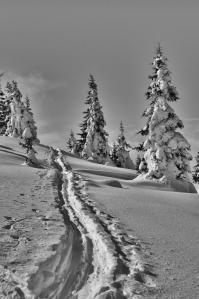 neige b&w