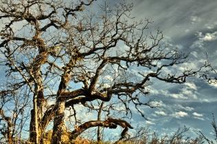 arbre_couleur chaude