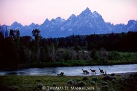 Buffalo Fork Crossing Grand Teton National Park, Wyoming Print 2825