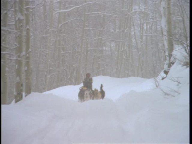 833160698-traineau-a-chiens-chien-de-traineau-colorado-neige