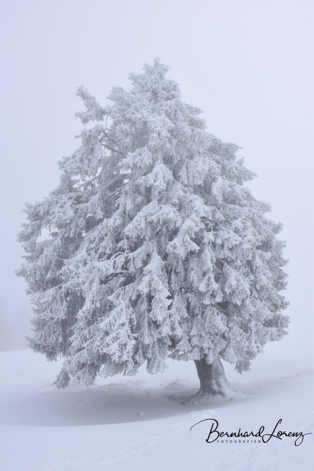 arbre2018.jpg