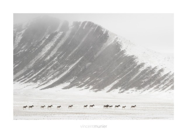 ©Vincent-Munier-TIBET156_201210-tib-_VVM6182