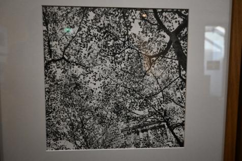 arbres - Viviane Maier