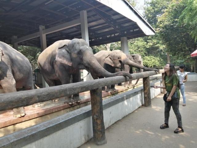 elefantenmuseum-in-myanmar-soll-auf-bedrohte-tiere-aufmerksam-machen-74ac