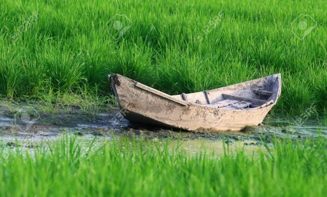 Old wooden boat in a paddy field