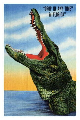 Crocodile MCX MYK